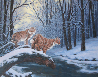 """Bobcats in Snow"" by Mary F. Kokoski"